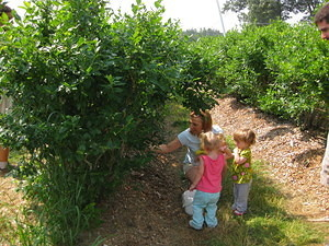 Fruit Picking 2010