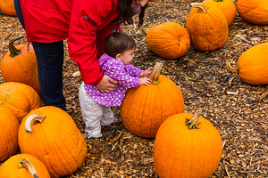 2015-10-25 - Pumpkin Picking at Parlee
