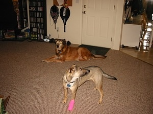 Penny's Hot Pink Bandage