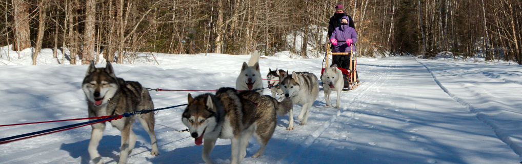 Jen and I took her birthday off to go dog sledding up in Warren, NH